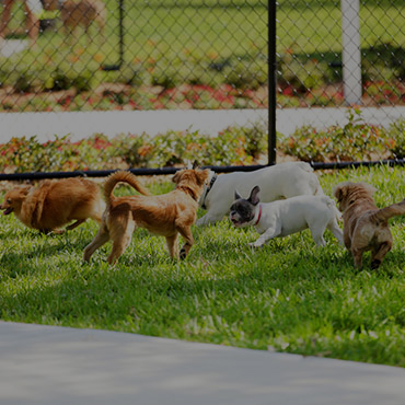 Large Dog Park at Pleasant Springs Apartments